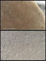 Гименофоры: Fomes fomentarius (верхнее фото) и Ganoderma applanatum (нижнее фото). Фото Татьяны Светловой (Москва)