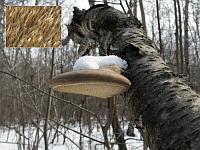Piptoporus betulinus - пиптопорус березовый (березовая губка). Фото Татьяны Светловой (Москва), 28 марта 2009 г.