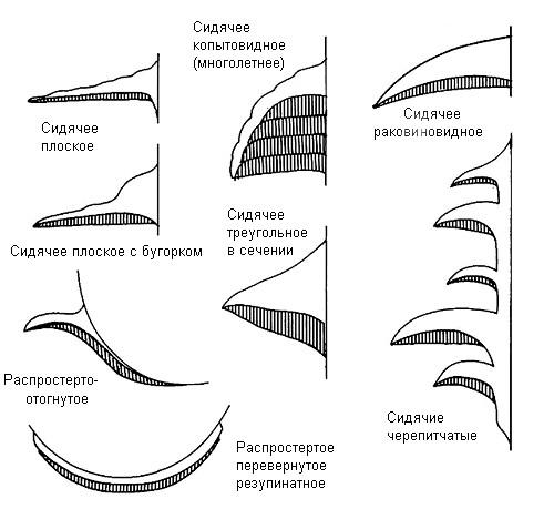 Типы плодовых тел трутовых грибов без ножки