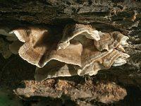 Postia balsamea – постия пихтовая. Фото Владимира Капитонова (Ижевск), 4 октября 2009 г.