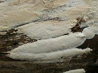 Antrodia crassa - антродия толстая. Фото Владимира Капитонова (Ижевск), 22 октября 2012 г.