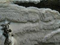 Неидентифицированный гриб. Фото Татьяны Светловой (Москва)