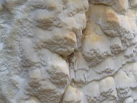 Skeletocutis odora - скелетокутис пахучий. Фото Лукашиной Елены (Москва), 7 июля 2007 г.